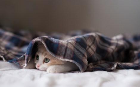 kitten-bed-photo-1.jpg